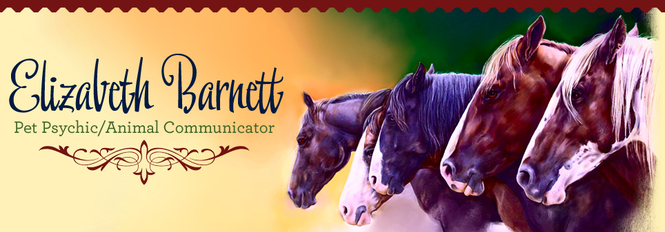 equine psychic lexington ky